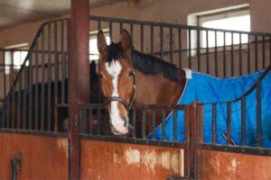 Pferd eingedeckt mit blauer Decke im Stall