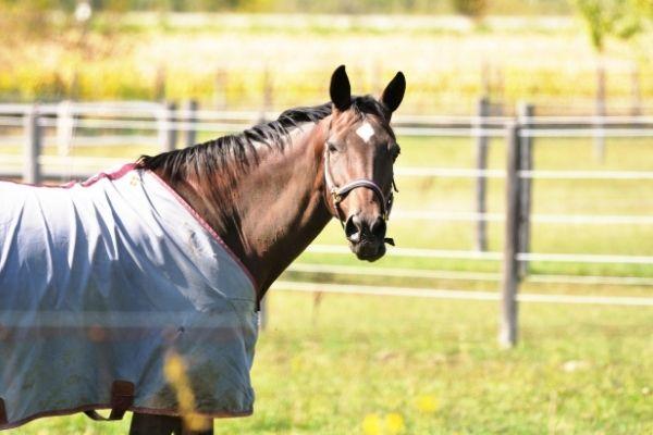 Pferd mit grauer Wecke von der Seite