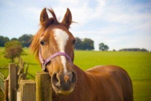 Pferd steht am Zaun auf einer Koppel