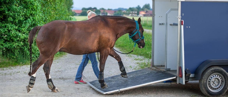 Pferd wird in einen Pferdeanhänger verladen