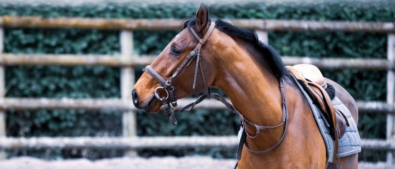 Pferd von der Seite