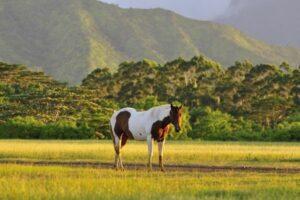 Urlaub mit Pferd: Stute steht vor einem Gebirge