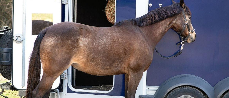 Pferd steht vor einem Pferdeanhänger