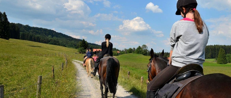 Pferd zur Verfügung Ausritt
