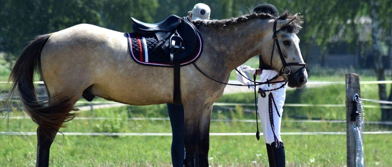 Sattel für Pferdesport