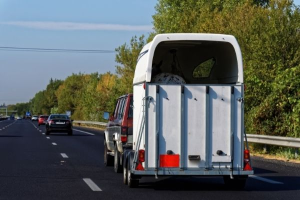 Pferdetransport über Autobahn