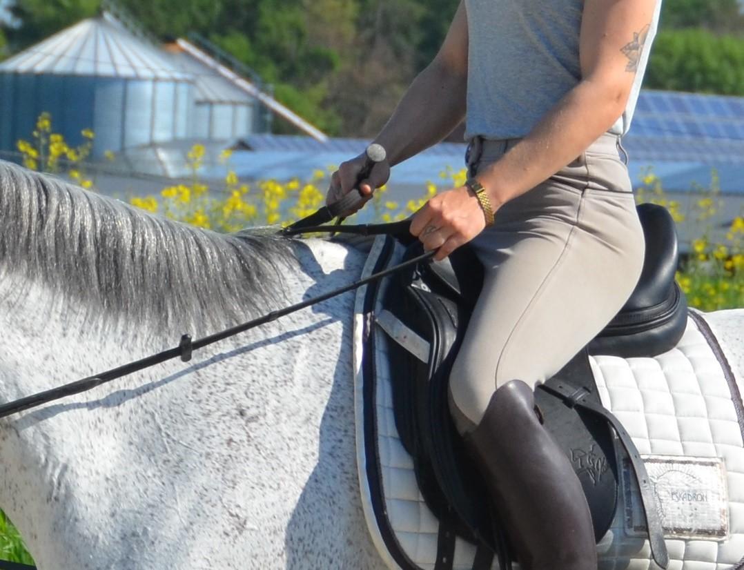Die richtige Handhaltung | Die Reiterhand