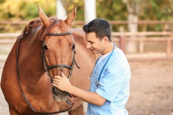 Shivering Pferd Behandlung