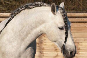 Pferdefrisur Spanischer Zopf
