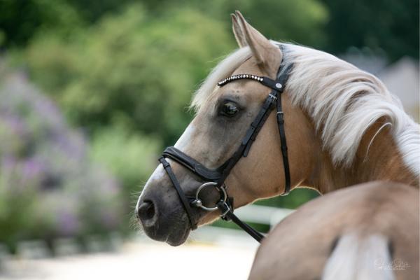 Pferd Nahaufnahme