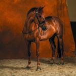 zaumzeug-arten-reithalfter-dyon-pferd
