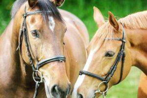 Zwei Pferde nah beieinander